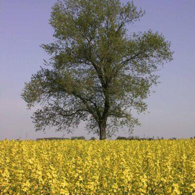 ÖKB – Market Study on Agro-Industrial Supply Chains in Vojvodina, Serbia